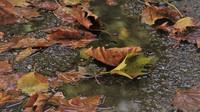 Předpověď počasí na noc a pátek 30. října - anotační obrázek