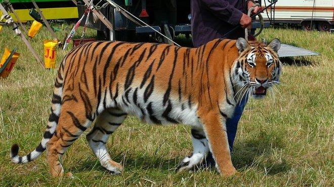 Zákaz drezury zvířat v cirkuse? Poslanci dali novele zelenou - anotační obrázek