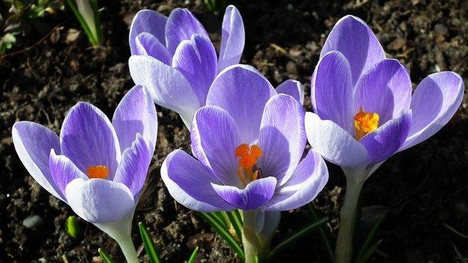 Jaro vystrkuje růžky. Předpověď počasí na noc a sobotu 22. února - anotační obrázek