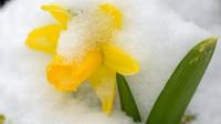 Česko zasáhne sněžení a mrazy. Předpověď počasí na noc a pondělí 30. března - anotační obrázek