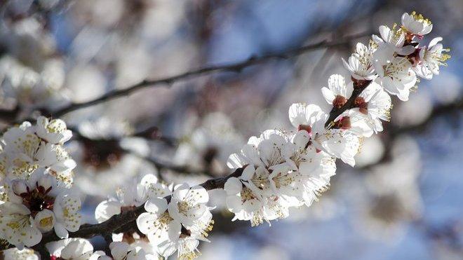 Teplé a slunečné počasí bude pokračovat. Předpověď na noc a středu 8. dubna - anotační obrázek