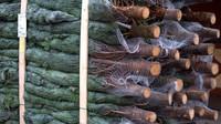 Ceny vánočních stromků zůstanou nebo se sníží - anotační foto