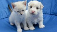 Psy a kočky nepůjde koupit ve zverimexech ani na veřejných místech - anotační obrázek