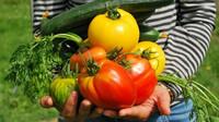 Zdražující byty i zelenina ženou Čechy do zahrádkářských kolonií. Ceny chatek proto dramaticky rostou - anotační obrázek